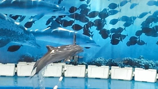 Golden Donaire Beach Hotel: Dolphin Show at Barcelona Zoo
