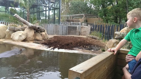 Golden Donaire Beach Hotel: Hippos