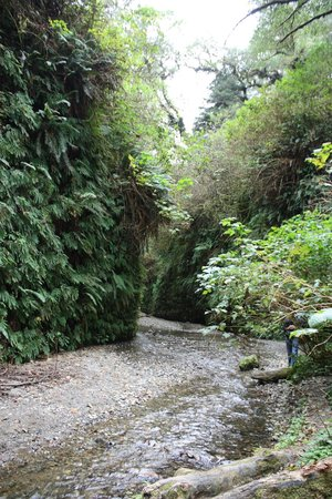 Prairie Creek Redwoods State Park: Fern Valley
