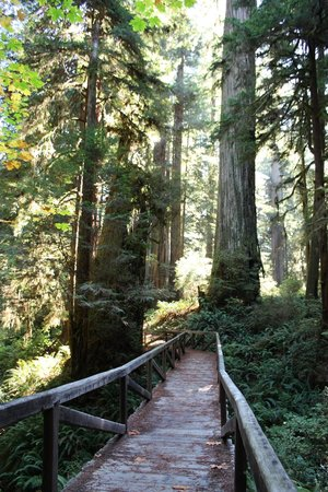 Prairie Creek Redwoods State Park: Hiking trail behind the Visitor Center