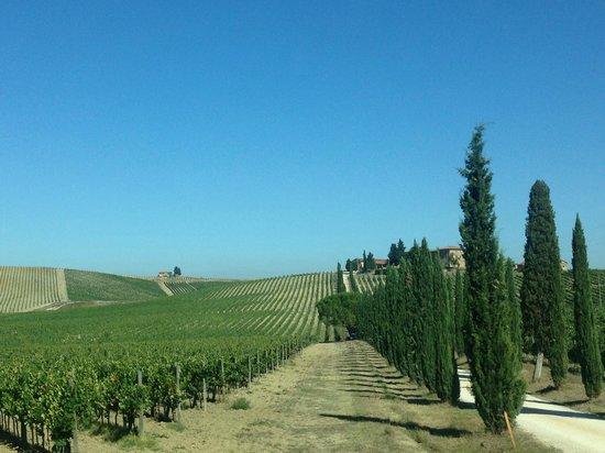 Mariani Bed & Breakfast: Tuscan Hills