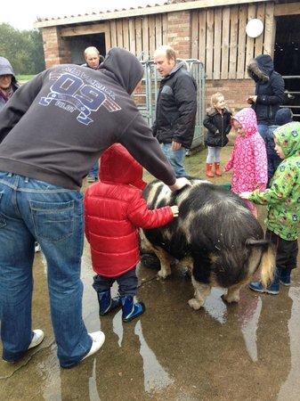 Big Sheep & Little Cow: Get to pet the animals