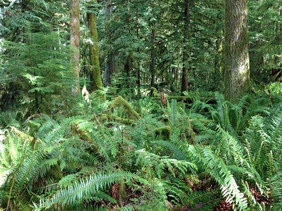 Marymere Falls: Rainforest