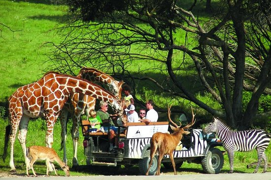 The 10 Closest Hotels to Fossil Rim Wildlife Center, Glen Rose ...
