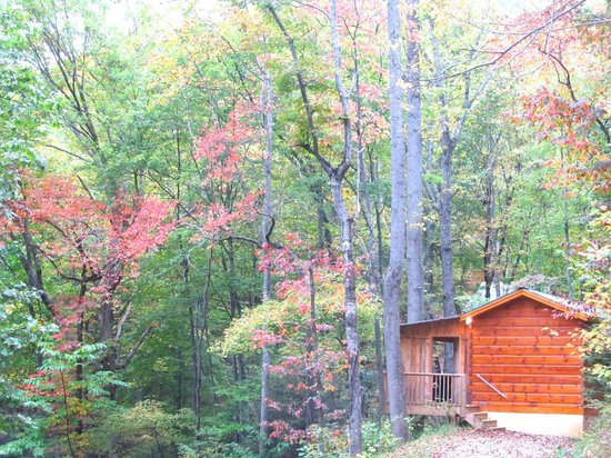 Cabins of Asheville: The cabin directly across from ours.