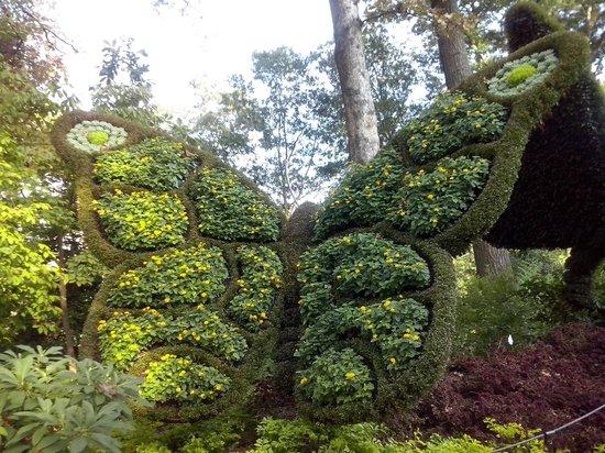 Atlanta Botanical Garden: Butterfly
