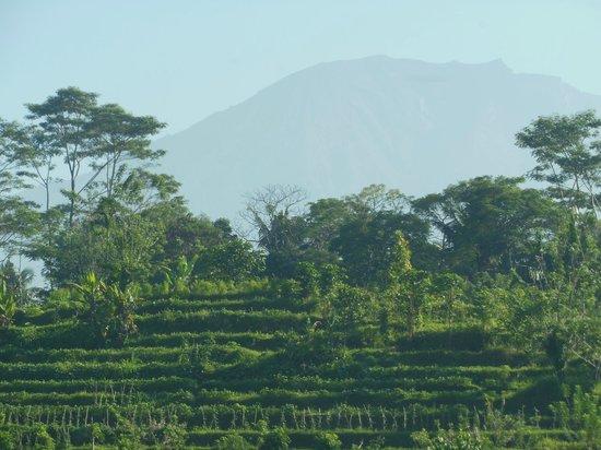 Subak Tabola Villa: vue Mont Agung