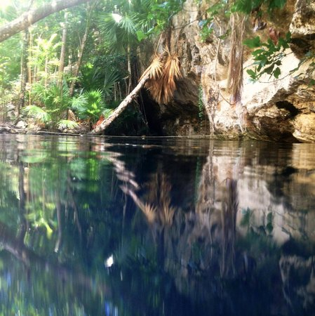 The Scuba Tribe : Beautiful entrance to the cenote: you would hardly know it goes down vertically another 65-70ft.