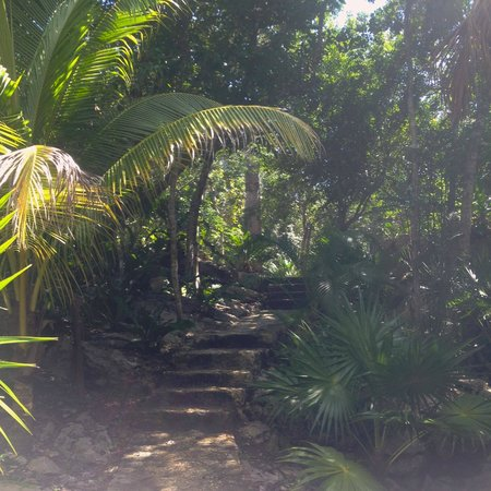 The Scuba Tribe : The staris down to the cenote: be prepared to walk a small distance with your weights and tank o