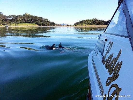 Dive North: Dolphins at Roberton Island