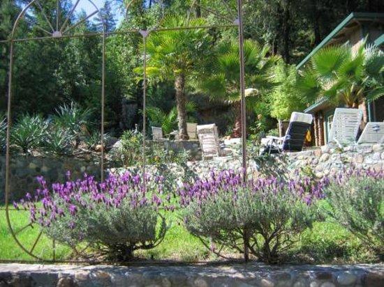 Alexander Valley Lodge : Garden