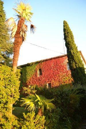 Villa Cambi B&B: Le jardin