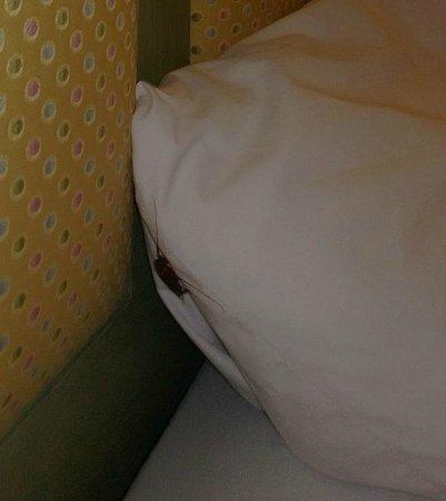 Prytania Park: pillow case