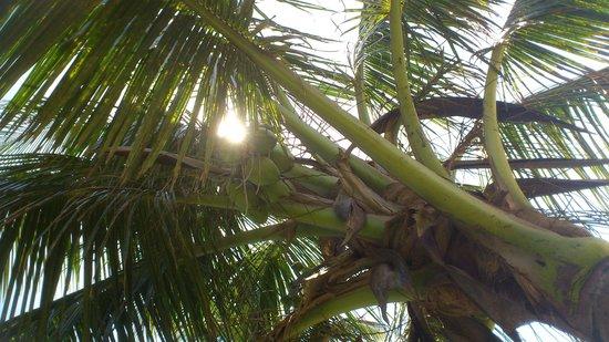 Severin Sea Lodge: genieten van de schaduw van de palm bomen