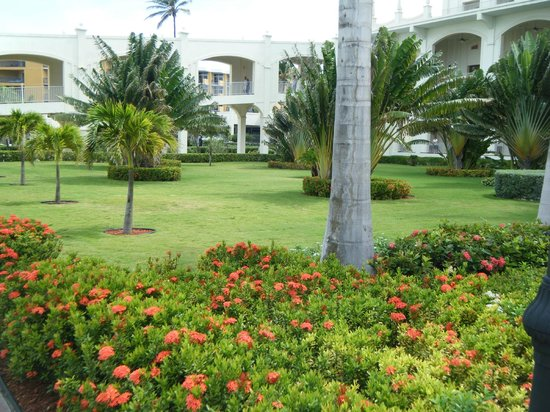 Hotel Riu Palace Aruba: Gardens by pool