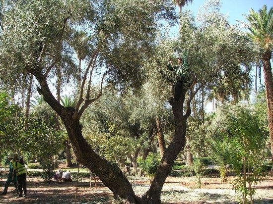 Cyber Parc Arsat Moulay Abdeslam : le parc