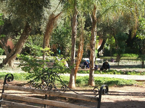 Cyber Parc Arsat Moulay Abdeslam : le ramassage des olives