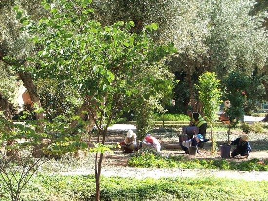 Cyber Parc Arsat Moulay Abdeslam : ramasage des olives
