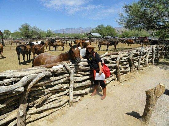 Tanque Verde Ranch: I cavalli, i bei cavalli del Tanque Verde
