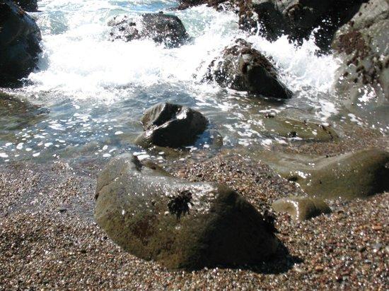 Leffingwell Landing: Gravel Rock Shoreline