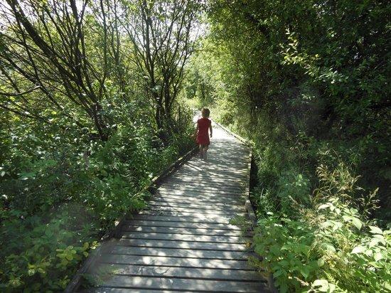 Le Mont Rigi: wandeling die er achter ligt