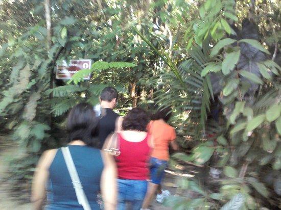 Itacoatiara, AM: Passeio nas trilhas