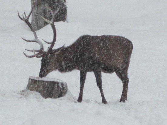 Auf der Pirsch nach Hirsch : Deer