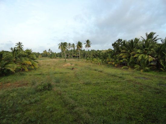 Pelwehera Village Resort: vue du balson de la chambre