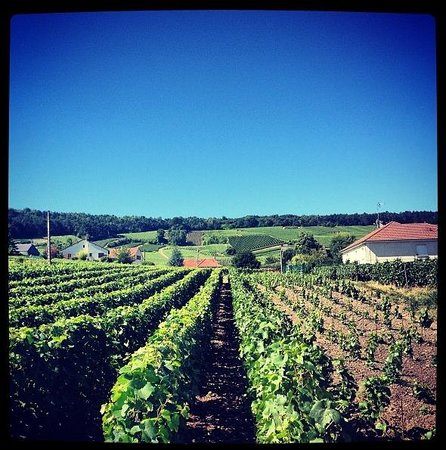 Raw France Champagne Visits : Neighboring vines