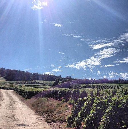 Raw France Champagne Visits : The sun was bright and shining
