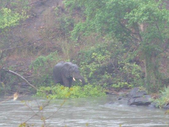 Mkulumadzi Lodge: Elephant in the unseasonal rains
