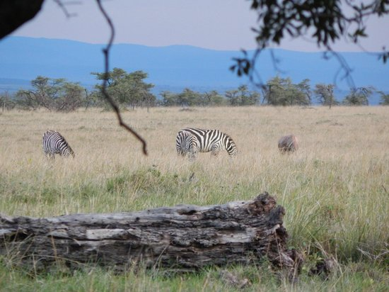 Elephant Pepper Camp: view from our tent