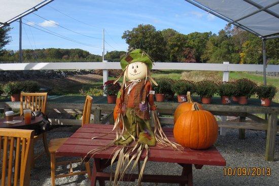 Smolak Farms: Thanksgiving pumpkins