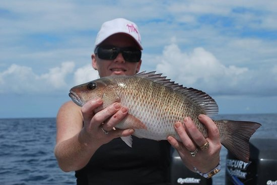 Kingdom Business Fishing Charters: snapper