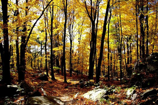 Rib Mountain State Park : through the woods