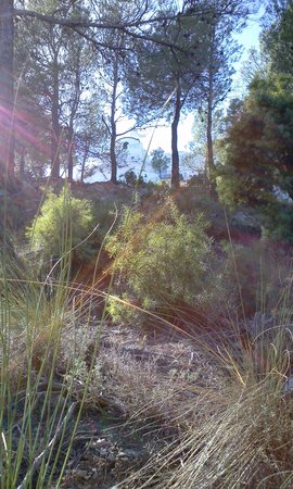 Hostal Rural Los Naranjos: hermita cristo del zapato
