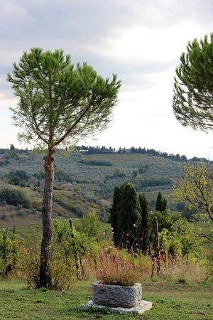 Agriturismo Sovigliano : The view