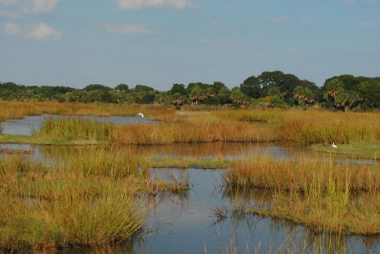 The Lodge on Little St. Simons Island: Fall at the marsh