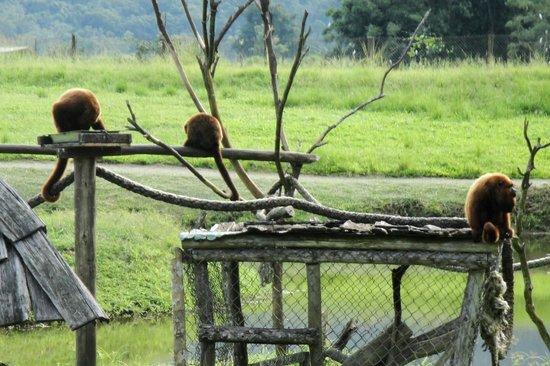 Portobello Resort & Safari: Mini-safári