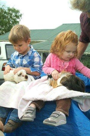 Waitomo Big Bird & Miniature Animal Petting Farm: Big Birds & Miniature Animals
