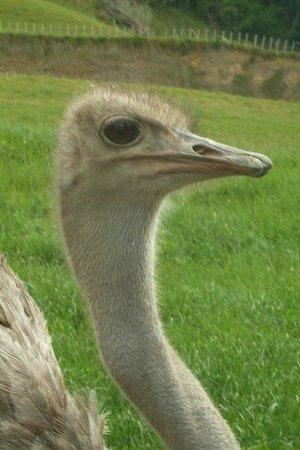 Otorohanga, Nueva Zelanda: Big Birds