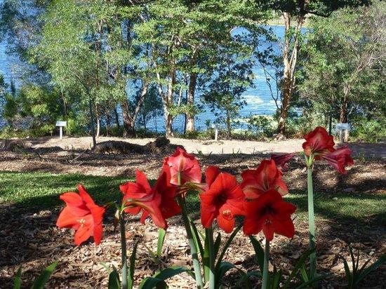 Noosa Botanic Gardens: Noosa Botanic Garden