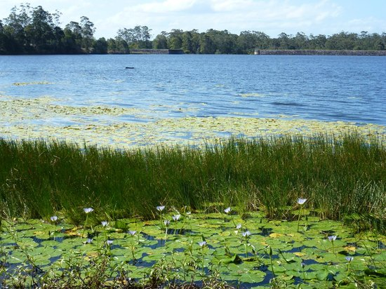 Noosa Botanic Gardens : Lake Macdonald and Noosa Botanic Garden