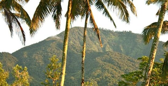 Sarinbuana Eco Lodge: mountain view