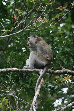 Bangkatan Homestay: One of the many types of monkeys