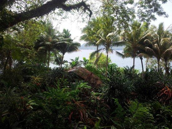 كورال كوايز فيش آند دايف ريزورت: Paradise