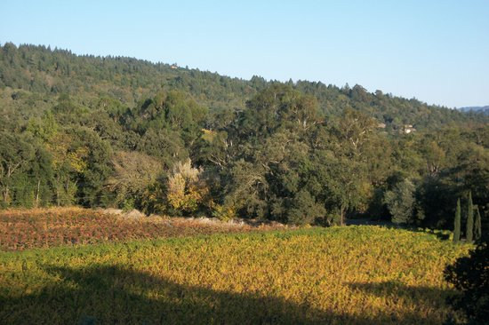 The Wine Country Inn: The view from our room