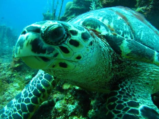 Sueno Del Mar Resort: Out diving