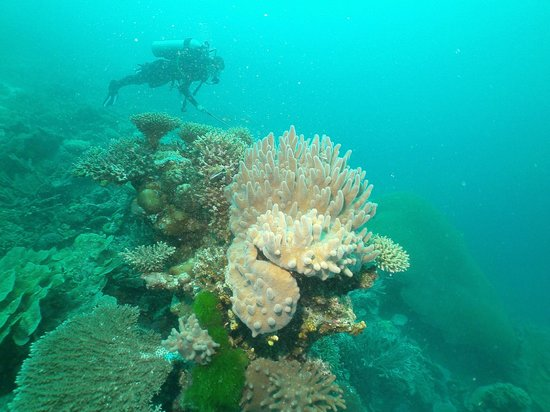 Mai Dive - Astrolabe Reef Resort: Great diving!