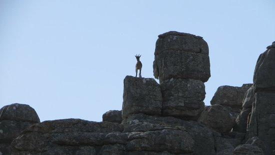 Antequera, Spanyol: Overvåget af bjergged